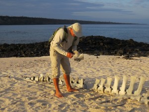 Harry teaching a group about whale bones found on the beach